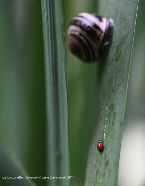 ladybird Giverny-Jane_Davenport