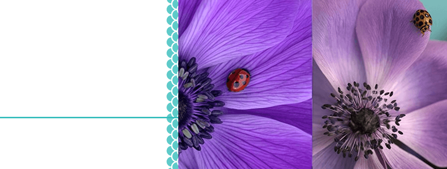 about-ladybirds